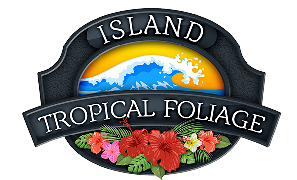 Island Tropical Foliage Wholesale Nursery - Wholesale Nursery in Homestead, Florida